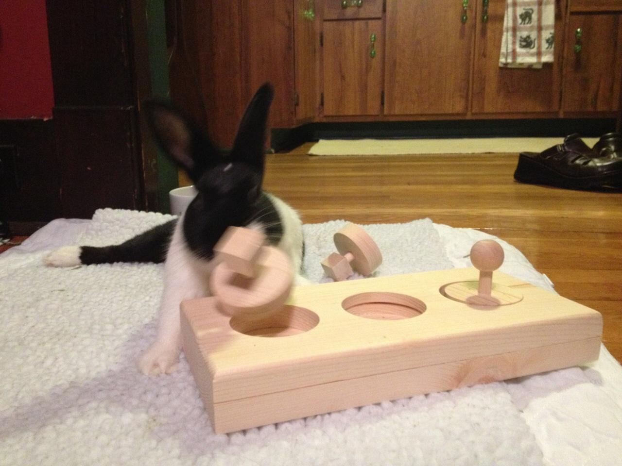 Toys  House Rabbit Society