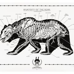 Black Bear Diagram Label The Following Of Respiratory System Anatomy Sheet No 14 Prints Rabbit