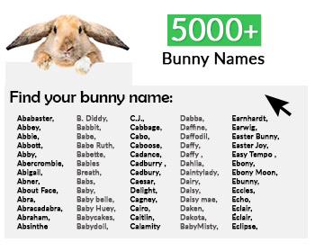 5000 most popular rabbit