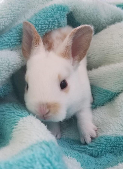 Where To Buy Baby Rabbits Near Me : where, rabbits, Rabbit, Florida, Rabbits, Rabbits.life