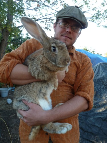 Giant Flemish Rabbit For Sale Near Me : giant, flemish, rabbit, Flemish, Giant, Rabbits, North, Dakota