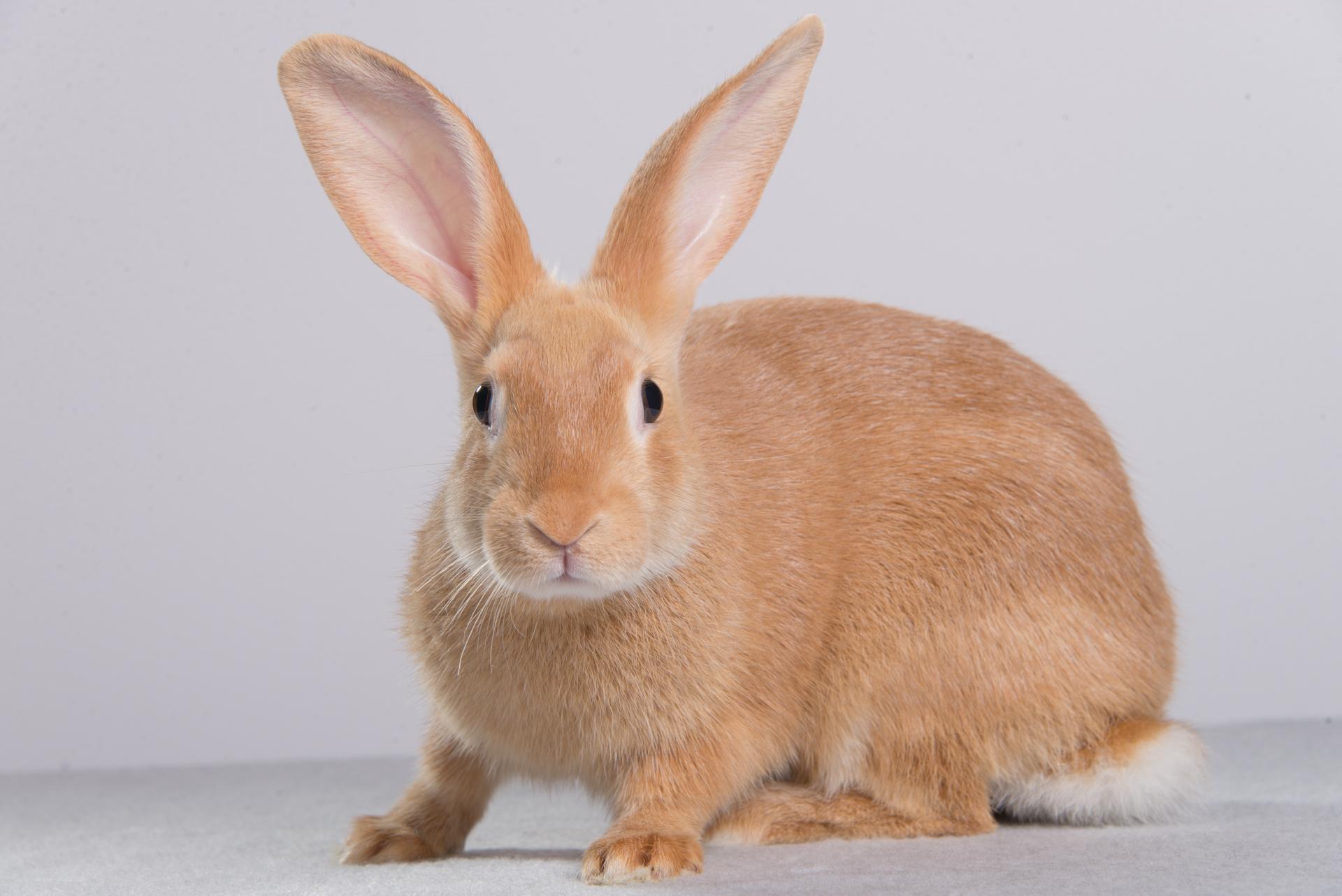 Rabbit Smarties Creative Resources For Rabbit Keepers