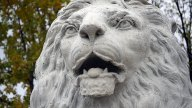 calgary-icons-lion-cu
