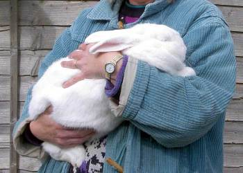Holding a rabbit