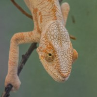 Observations Of A Chameleon