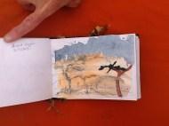 jennies-sketchbook
