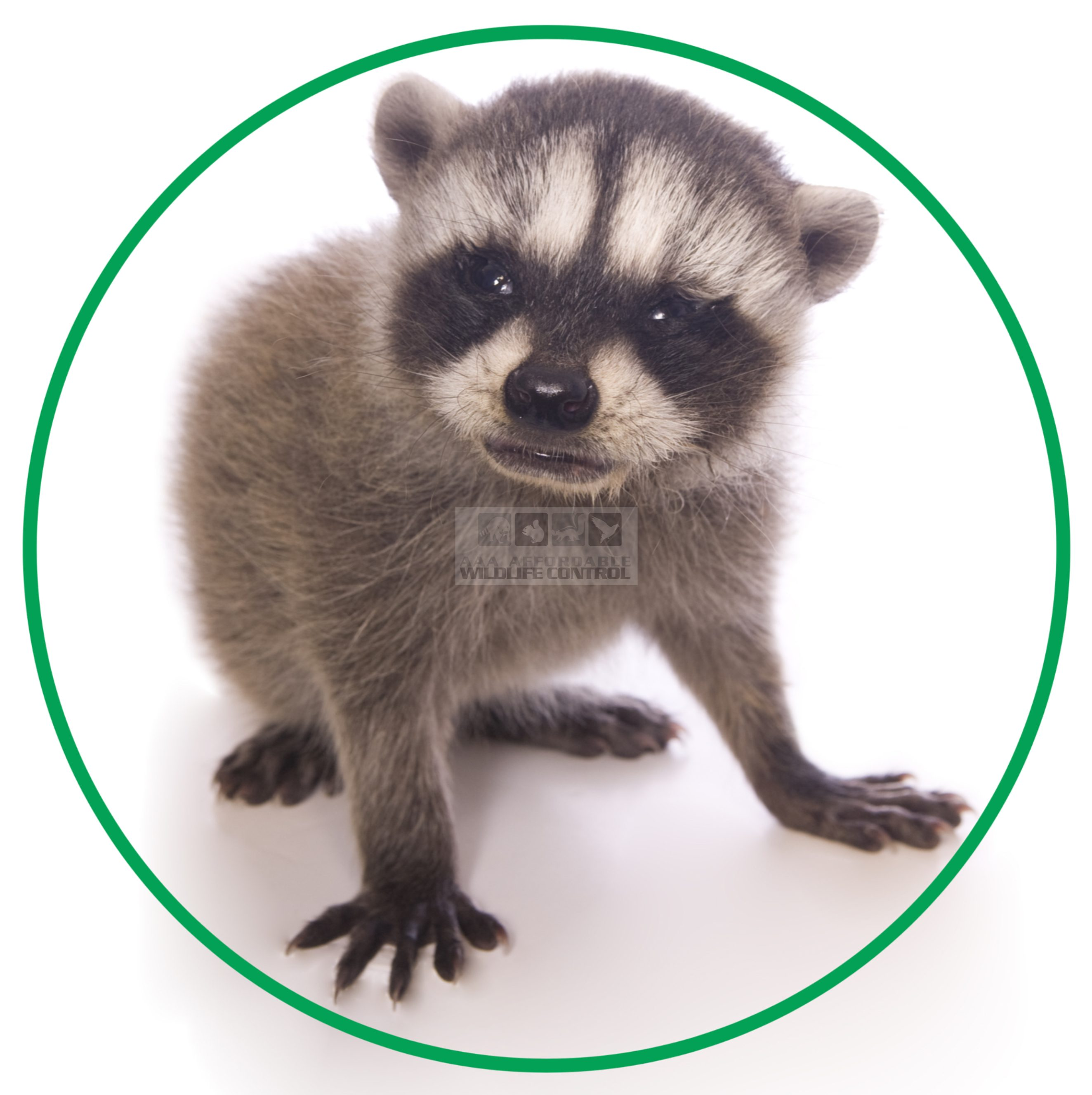 Raccoon Removal Toronto logo, Raccoon Removal Services Toronto