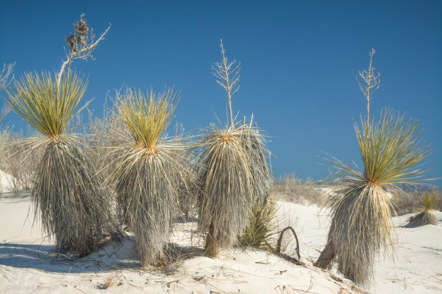 Whit Sands National Monument, New Mexico - Racheal Christian - rachealchristianphotography.com