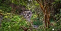 Hells Gate Rotorua New Zealand - Photography By Racheal Christian
