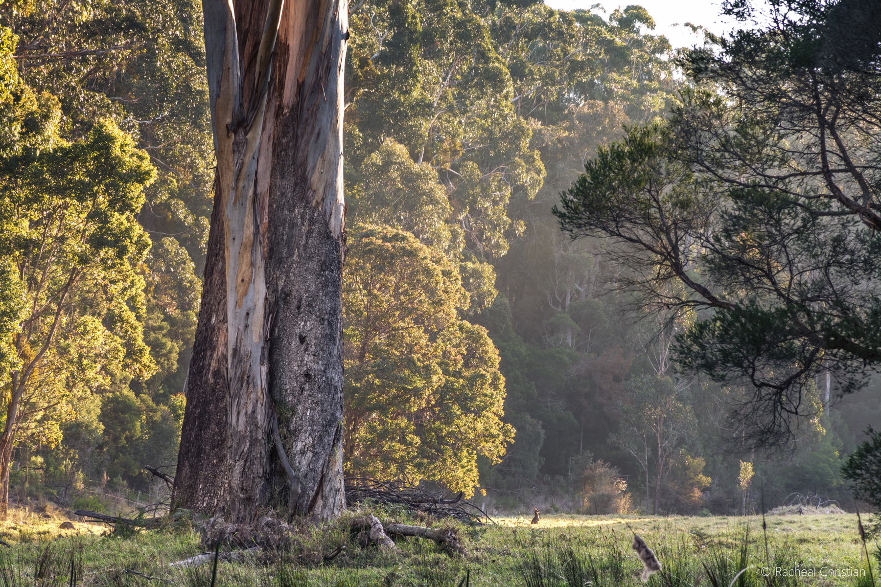 Photo Of The Week: The Meadow | Eden NSW