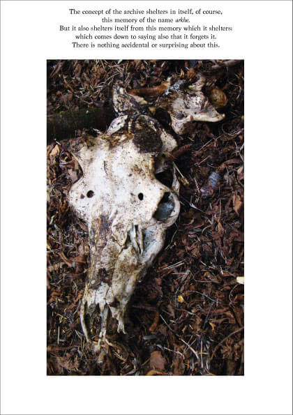 deer skull_Categories on Nature_prints_by Rachela Abbate