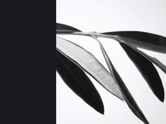 Olivo_1_herbarium-series-by-Rachela-abbate