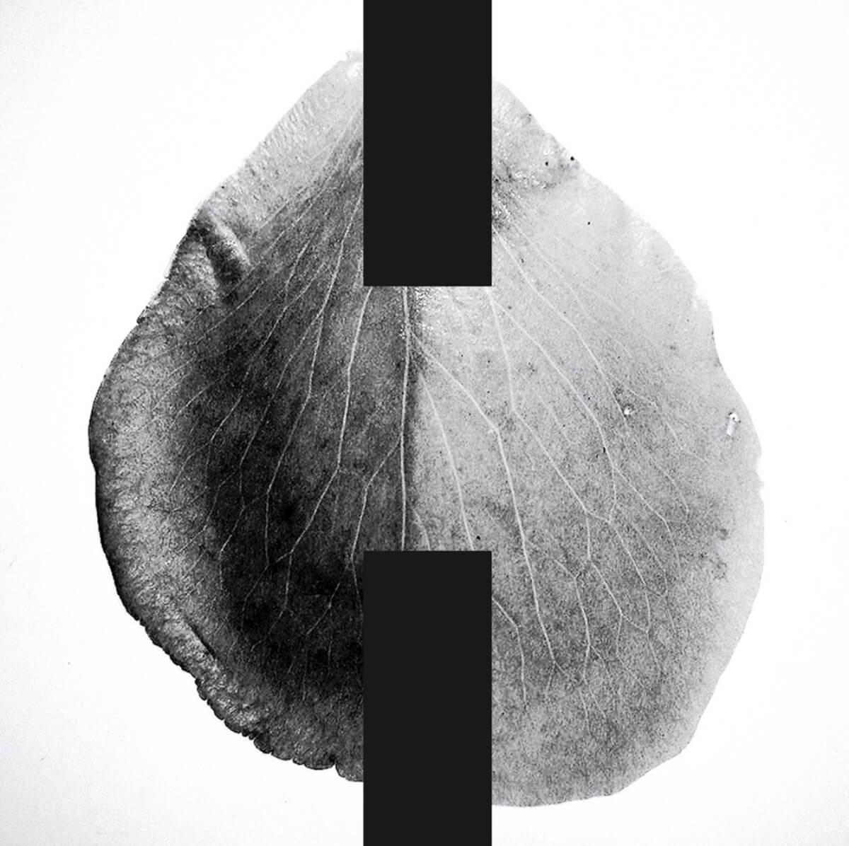 rachela abbate Rose-_2-_-herbarium-series-by-rachela-Abbaet herbarium
