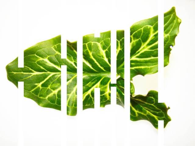 rachela abbate arum_Herbarium-series-by-Rachela-Abbaet fractalis ®