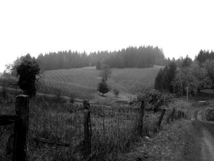 Luminous Hills Vineyard