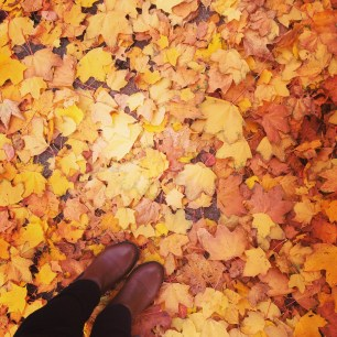 Gorgeous leaves during a walk