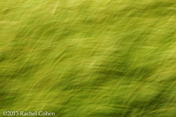 Flowing, light filled, green abstract!