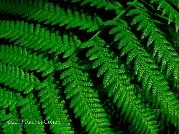 A Fern in full color.