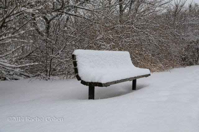 """""""Winter's Bench"""" 2 Taken just a few hundred feet away from the tree branches sits a single lonely bench piled high with snow.  Both of these images were taken while it was still snowing. I kept a rain sleeve on my camera during most of my walk. After a while it became so impractical that i just said forget it, and dried all of my gear afterwards. I truly love the look of freshly fallen snow. The only problem is that we've had soooo much of it this year!  The Great Lakes will be happy though! :)"""