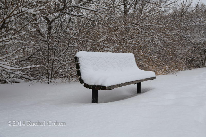 """Winter's Bench"" 2 Taken just a few hundred feet away from the tree branches sits a single lonely bench piled high with snow.  Both of these images were taken while it was still snowing. I kept a rain sleeve on my camera during most of my walk. After a while it became so impractical that i just said forget it, and dried all of my gear afterwards. I truly love the look of freshly fallen snow. The only problem is that we've had soooo much of it this year!  The Great Lakes will be happy though! :)"