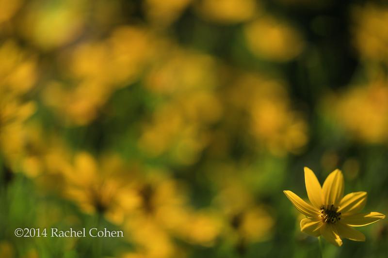 """""""Illumination in Yellow"""""""