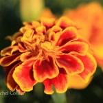 """""""Floral Summer"""""""