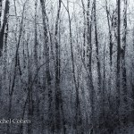 """""""Winter Forest"""""""