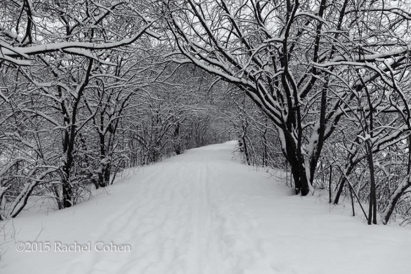 """Winter's Silence"""