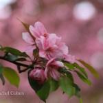 """""""Spring Happenings"""""""