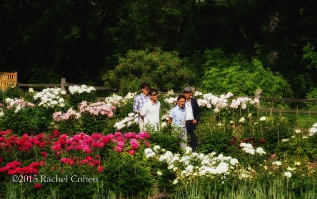 """Peony Garden Stroll"" Some peony admirers strolling through the Peony Gardens at Nichols Arboretum in Ann Arbor Michigan!"