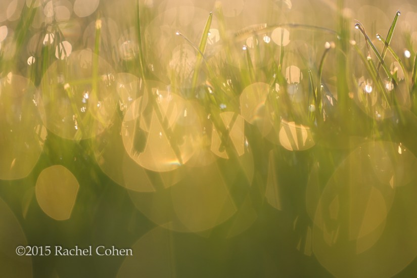 """Song of Light"" A bokeh delight in the fresh summer grass!"