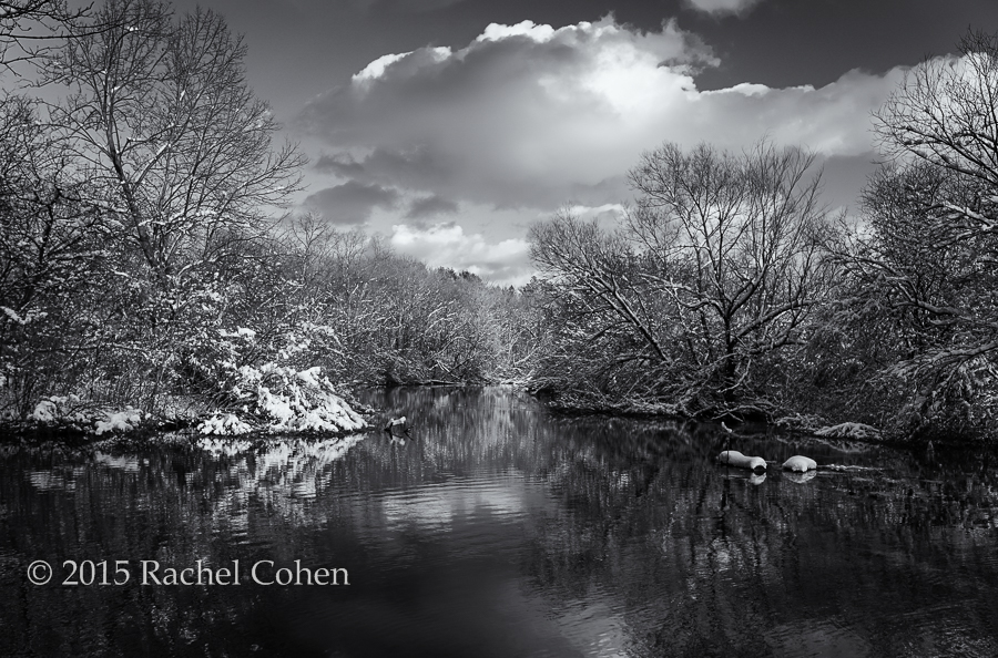 """""""Afternoon in Shades of Gray"""""""