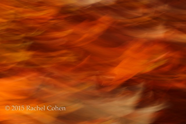"""""""Sweet Potato Mash"""" I had a year with a lot of motion blur abstracts, and this is one of my favorites!"""