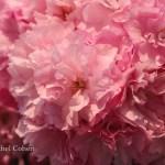 """""""Spring Finds"""""""