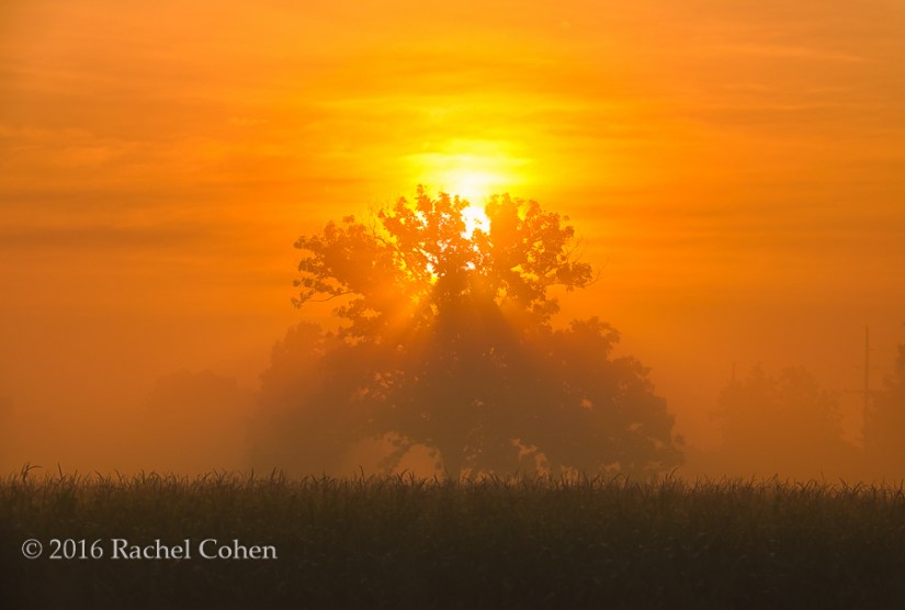 """Your New Day Rising"" Stunning Golden sunrise through the fog!"