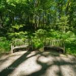 Nichols Arboretum Spring Walk