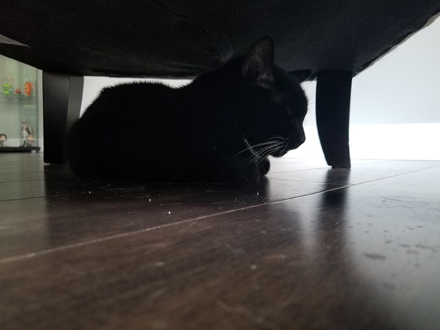Bumbledore under his chair.