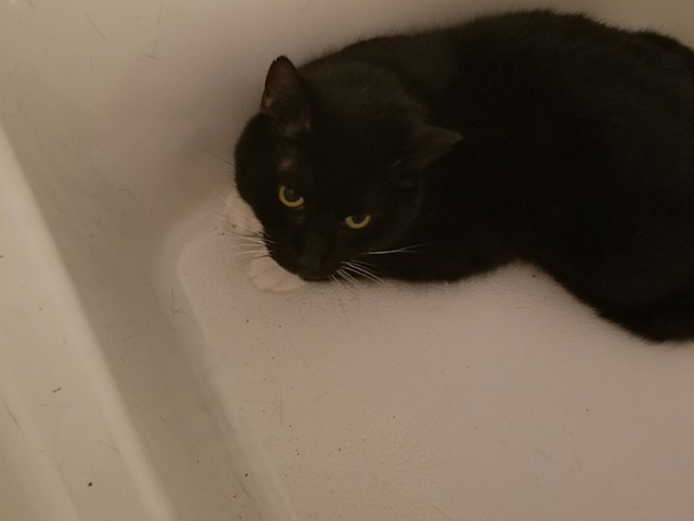 Bumble relaxing in the bathtub.