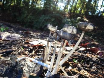 fungi.racheldragonfly-12