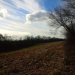 sun-and-field