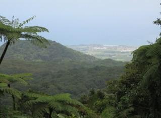 Carbet Waterfall #2: A Rainforest Walk
