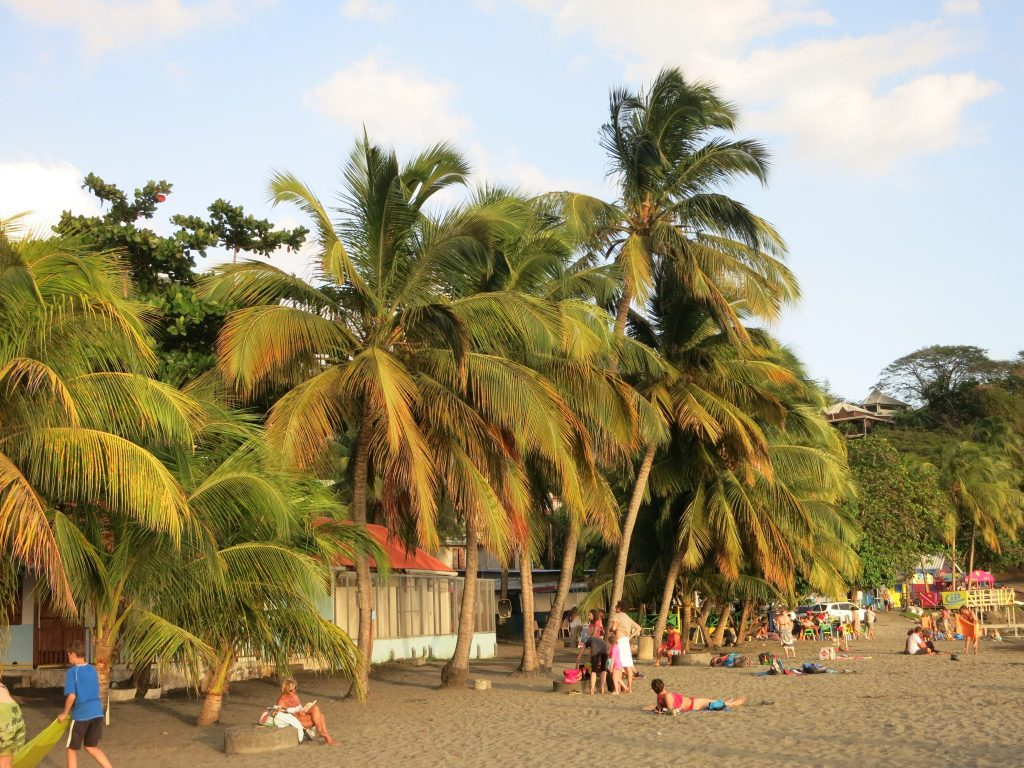 beach view in Guadeloupe: palm trees, tourists lying in the sun