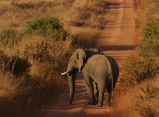 Malawi's Nyika National Park
