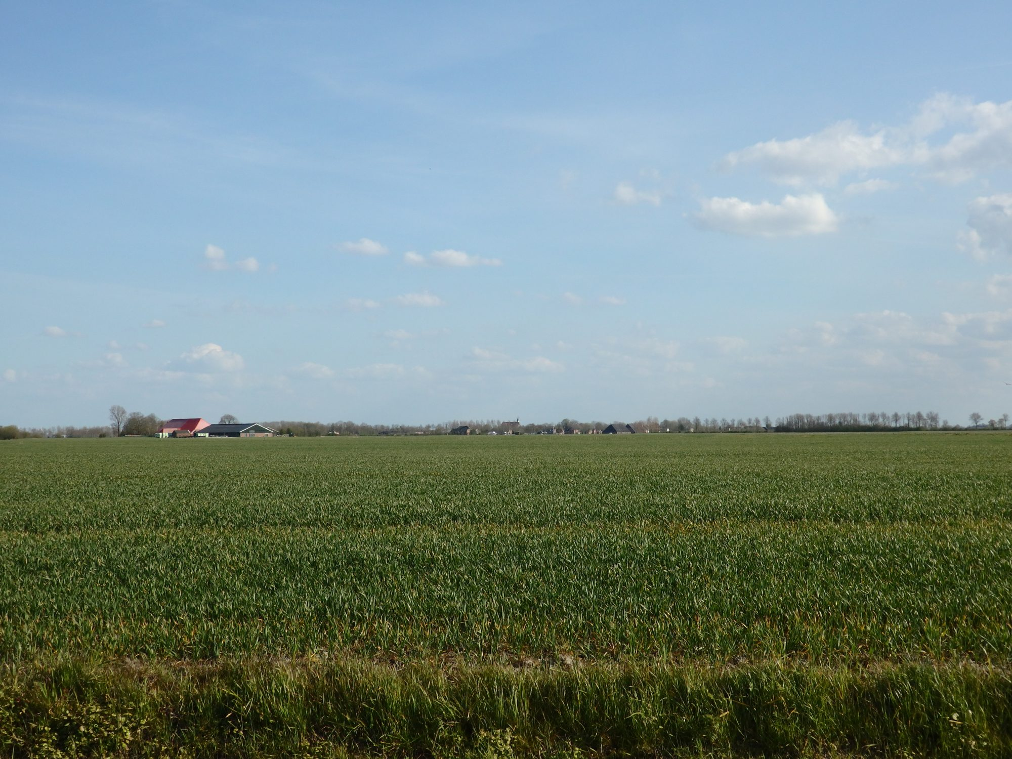 Big sky, flat land: typical Groningen province scenery