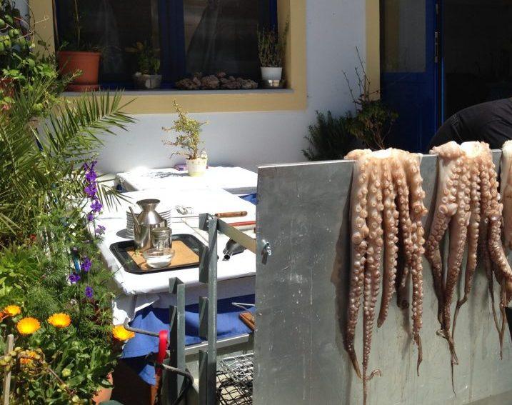 Fresh octopus, anyone? Photo courtesy of Rebecca Hall