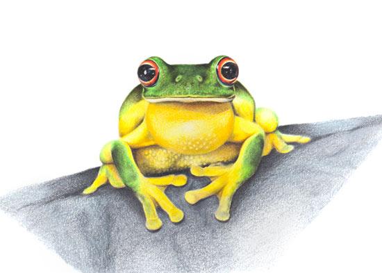 Australian Wildlife Art - Red-eyed Treefrog