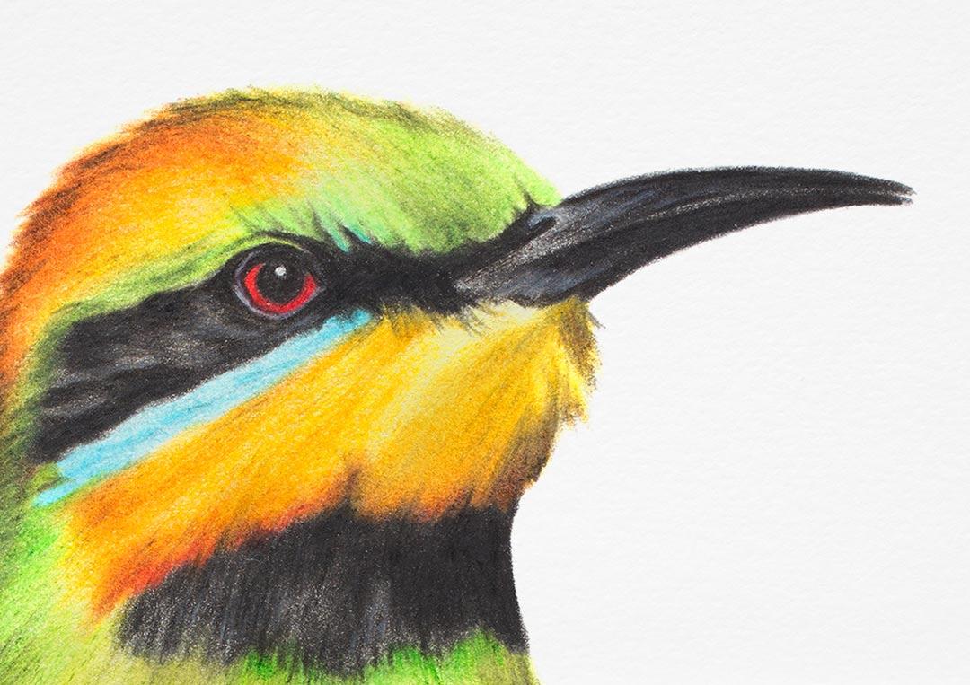 Rainbow Bee-eater – Fine Art Print