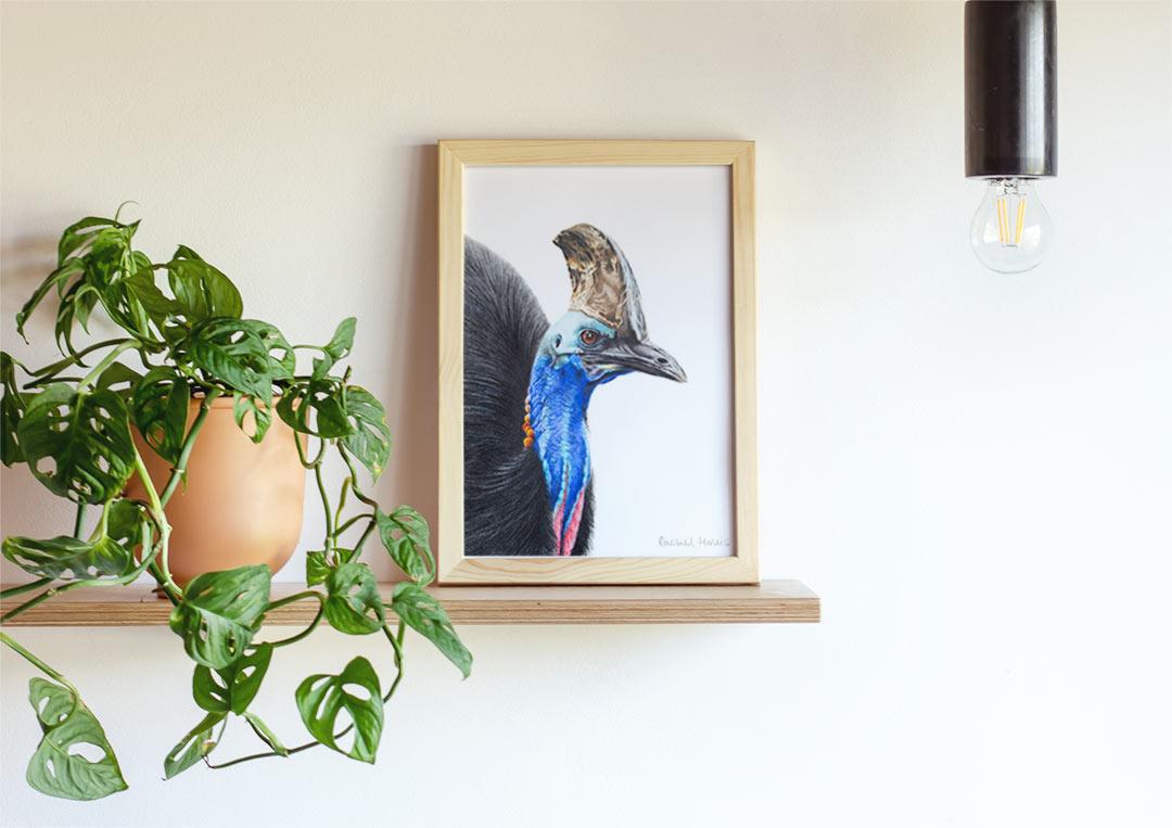Southern Cassowary – Example of Framed Fine Art Print