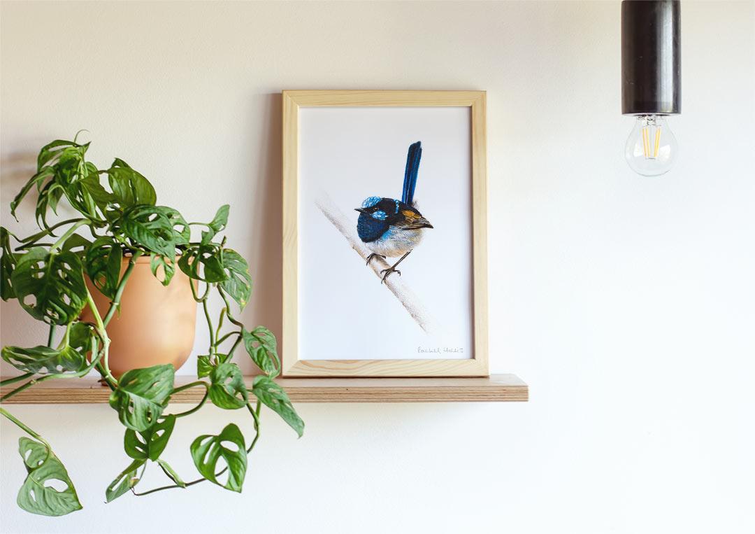 Superb Fairywren – Example of Framed Fine Art Print