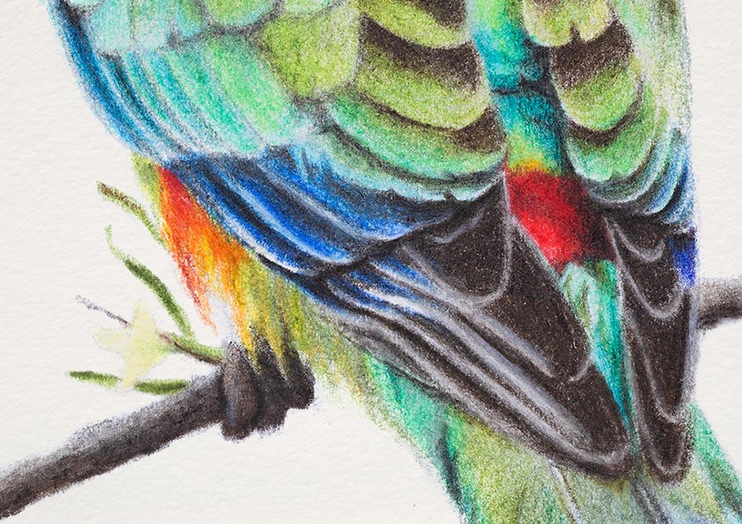 Mulga Parrot – Fine Art Print